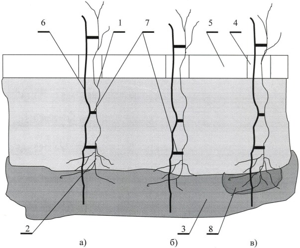 Способ посадки саженцев растений