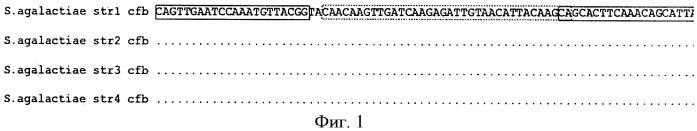 Тест-система для количественного определения streptococcus agalactiae в биологическом материале