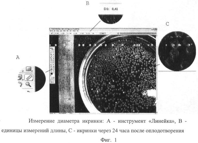 Способ оценки и сохранения морфометрических характеристик биологических объектов аквакультуры
