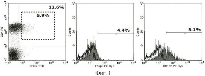 Способ обогащения регуляторных cd4+cd25+foxp3+t-клеток человека ex vivo