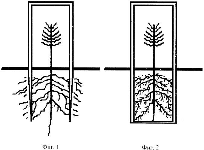 Способ выращивания посадочного материала
