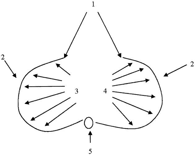Способ определения локализации острого воспалительно-деструктивного очага в брюшной полости в эксперименте