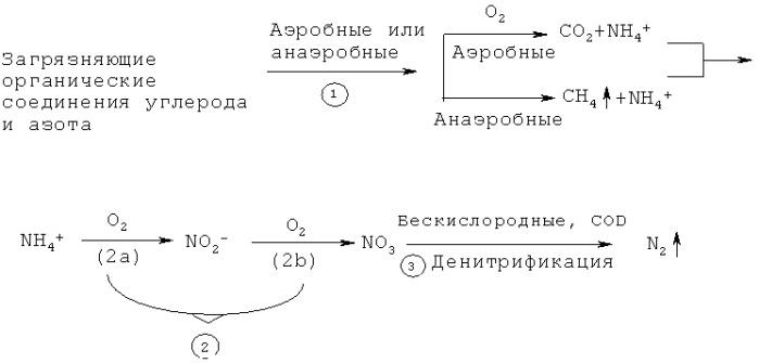 Способ удаления загрязняющих соединений с и n с использованием гетеротрофных бактерий, окисляющих аммоний