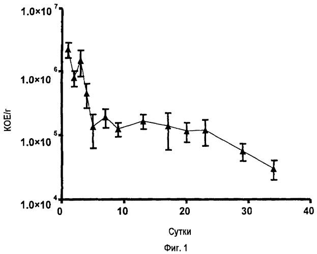 Штамм микроорганизма bacillus smithii tbmi12 mscl p737 и применение его в качестве пищевой или кормовой добавки, или компонента пробиотической композиции и пробиотическая композиция