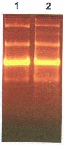 Способ получения рибонуклеиновой кислоты