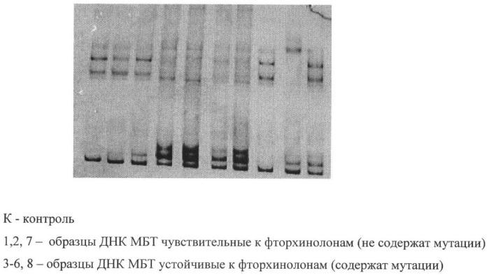 Способ диагностики чувствительности штаммов mycobacterium tuberculosis к фторхинолонам по гену gyr b
