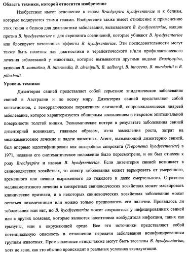 Гены и белки brachyspira hyodysenteriae и их применение