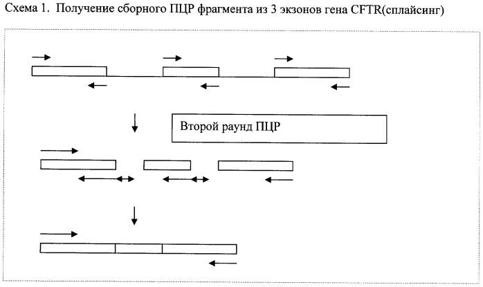 Способ получения объединенных фрагментов днк в пцр (варианты)
