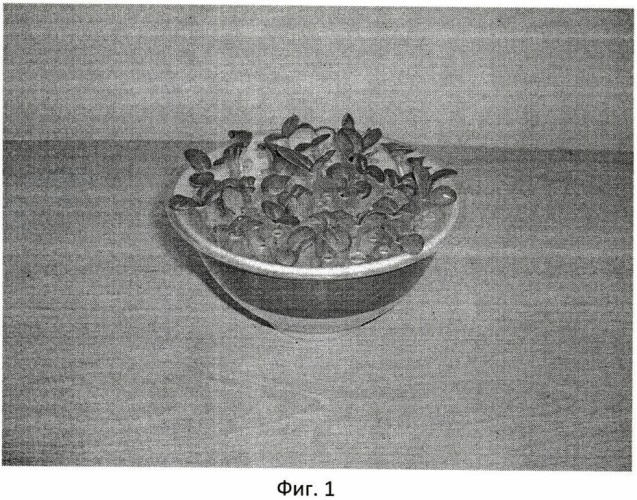Способ определения всхожести семян заразихи подсолнечной