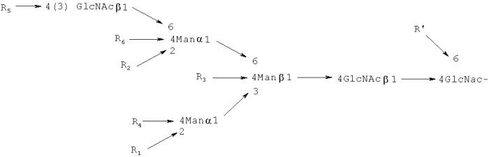 Способ обнаружения сахарных цепей с glcnac, синтезированных gnt-v