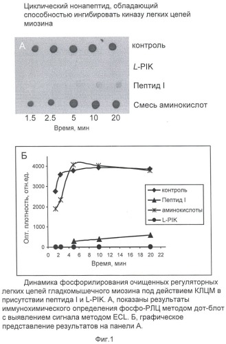 Циклический нонапептид, обладающий способностью ингибировать киназу легких цепей миозина