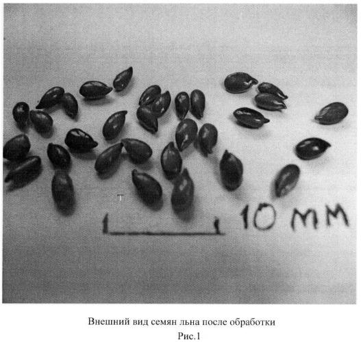 Способ обработки семян льна