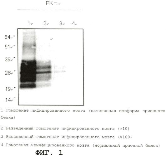 Связывающее вещество патологического прионного белка и способ обнаружения патологического прионного белка