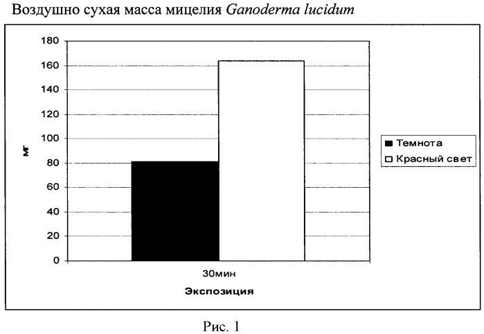 Способ выращивания мицелия ganoderma lucidum
