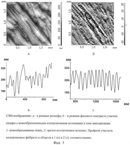 Способ оценки зрелости коллагеновых волокон
