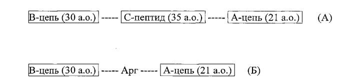 Рекомбинантная плазмидная днк pmsin4, кодирующая гибридный полипептид - предшественник инсулина человека, штамм bl21(de3)/pmsin4-продуцент рекомбинантного инсулина человека, способ получения рекомбинантного инсулина человека