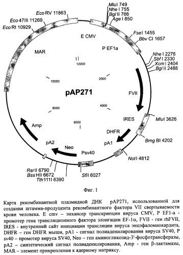 Рекомбинантная плазмидная днк pap271, кодирующая полипептид фактора vii свертываемости крови человека, и линия клеток mesocricetus auratus внк 21 k.13 (2h7) - продуцент рекомбинантного фактора vii свертываемости крови человека