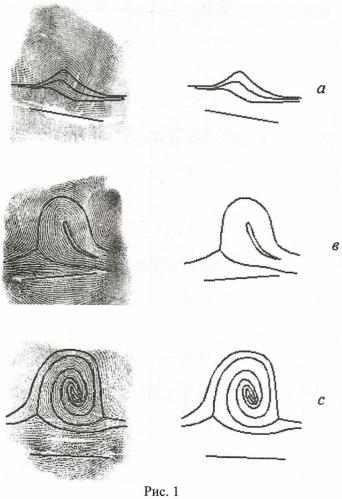 Способ формирования представления (шаблона) папиллярного узора