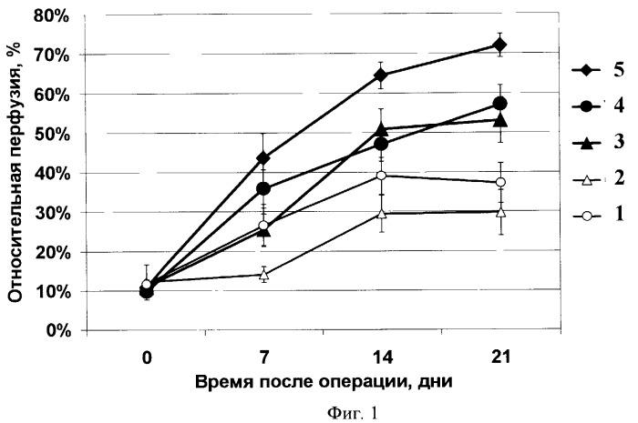 Средство для осуществления терапевтического ангиогенеза и способ его осуществления