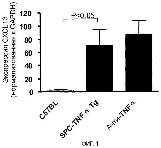 Антагонисты cxcl13 и их применение для лечения воспалительных заболеваний