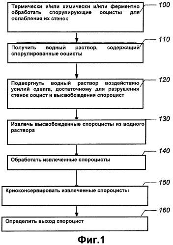 Способы высвобождения спороцист из ооцист с использованием регулируемых усилий сдвига