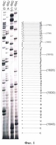 Способ определения первичной структуры рибонуклеиновых кислот