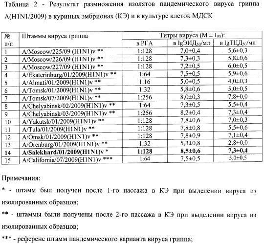 Штамм а/salekhard/01/2009(h1n1)v вируса гриппа а субтипа h1n1 для исследования лечебной и профилактической эффективности препаратов против вируса гриппа