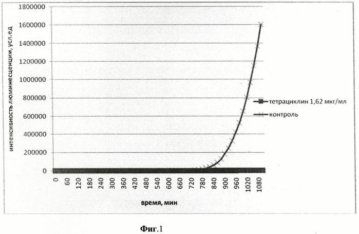 Способ оценки эффективности антимикробного воздействия антибиотиков и ультразвукового излучения на патогенные бактерии, существующие в форме биопленки