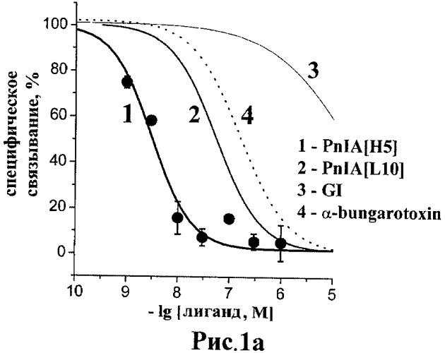 Аналог альфа-конотоксина pnia, обладающий высоким сродством и селективностью к ацетилхолин-связывающему белку из aplysia californica