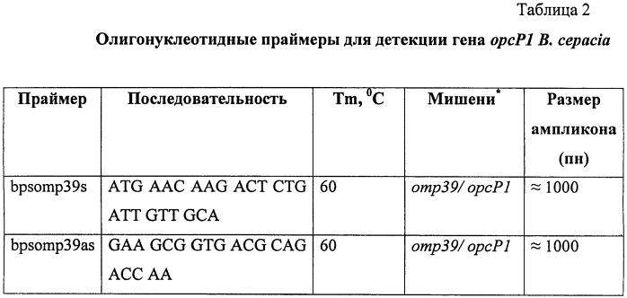 Мутантный штамм burkholderia cepacia km196, дефектный по продукции порина opcp1, для исследования молекулярных механизмов множественной резистентности к антибиотикам у патогенных буркхольдерий