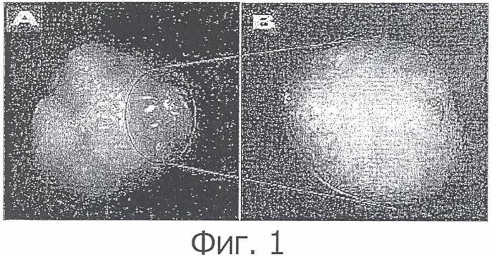 Растительная стволовая клеточная линия, полученная из покоящегося центра, и способ ее выделения