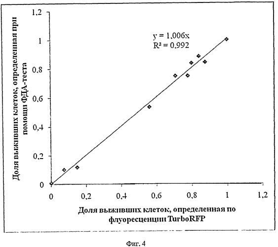 Флуоресцирующая клеточная линия mel kor-turborfp и способ ее использования для исследований in vitro в экспериментальной онкологии