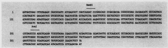 Способ выявления экспрессирующихся генов патогенных буркхольдерий методом дифференциального дисплея