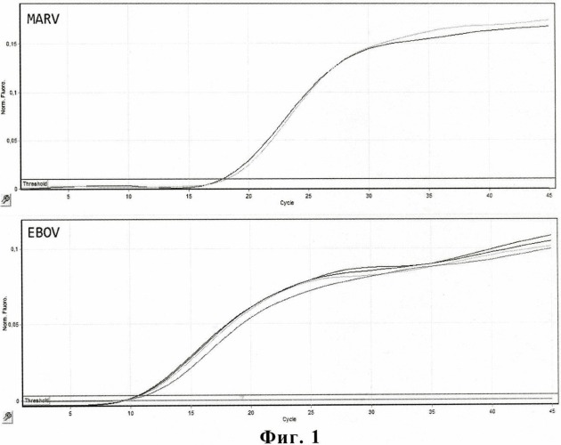 Набор олигонуклеотидных праймеров и флуоресцентно-меченых зондов для видоспецифичной экспресс-идентификации вируса марбург методом полимеразной цепной реакции