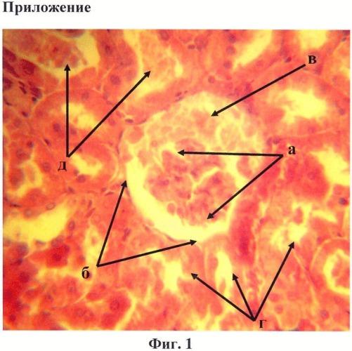 Способ уменьшения нефротоксичности ацетата свинца