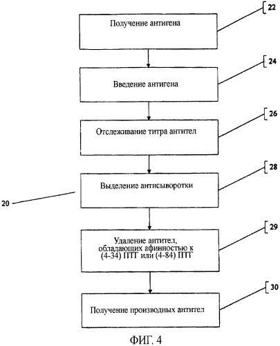 Антитела и пептидные антигены для получения антител, имеющих селективную специфичность связывания с биологически активным интактным паратиреоидным гормоном (птг(ртн))1-84