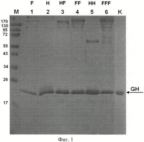 Способ микробиологического синтеза секретируемого соматотропина человека и штамм дрожжей saccharomyces cerevisiae - продуцент секретируемого соматотропина человека