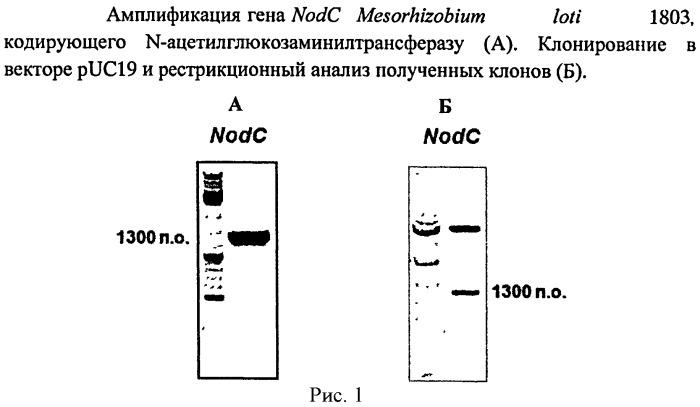 Способ ферментативного получения пента-n-ацетилхитопентаозы