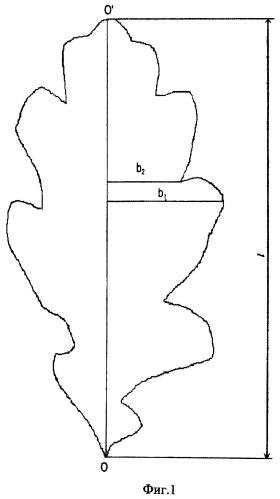 Способ определения площади листовой поверхности кроны дерева