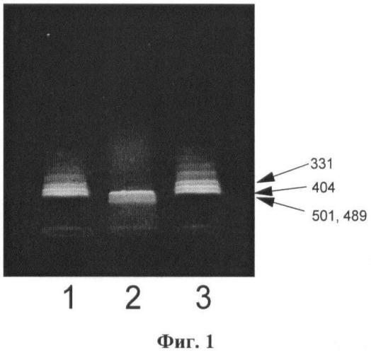 Штамм вируса эфемерной лихорадки крупного рогатого скота ephemerovirus bovinum для изготовления биопрепаратов для диагностики эфемерной лихорадки крупного рогатого скота