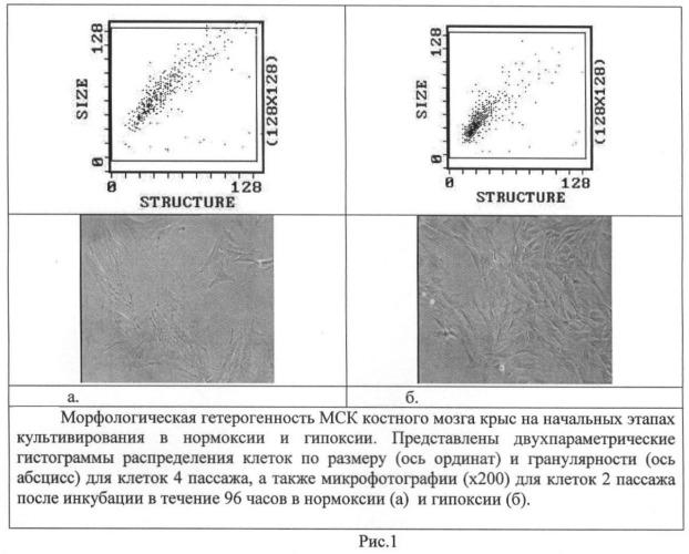Способ стимуляции формирования фиброзно-хрящевого регенерата костной мозоли у млекопитающих