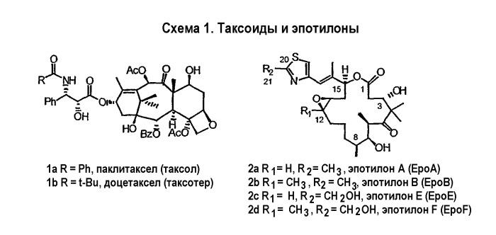 Синтез эпотилонов, их промежуточных продуктов, аналогов и их применения