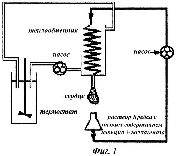 Фармацевтическая композиция для регуляции калиевых каналов в клетке сердечной мышцы, способ ее получения и ее применения