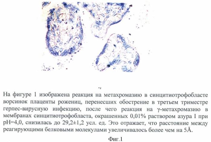 Способ оценки проницаемости мембраны синцитиотрофобласта ворсинок плаценты методом метахромазии у рожениц, перенесших в третьем триместре обострение герпес-вирусной инфекции с титром антител 1:12800