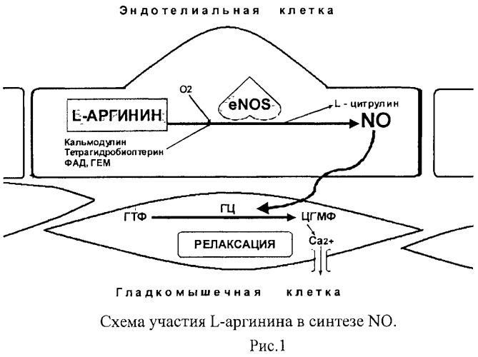 Композиция, обладающая эндотелиопротекторным, вазодилатирующим и ангиопротекторным эффектом
