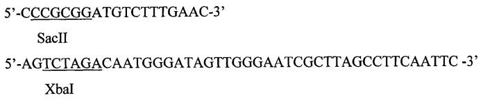 Рекомбинантная плазмидная днк ppbs-st9, кодирующая полипептид соматотропина, и штамм дрожжей saccharomyces cerevisiae для продукции рекомбинантного соматотропина