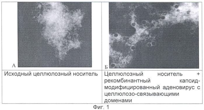 Способ очистки рекомбинантных аденовирусов млекопитающих и человека