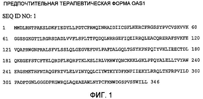 Мутации в генах oas1