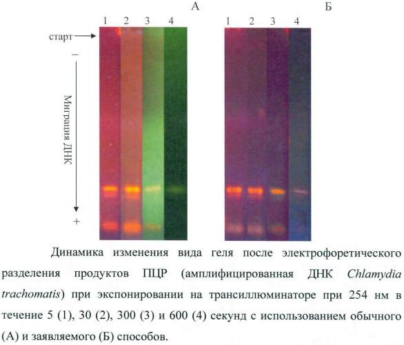 Способ защиты днк от ультрафиолетового излучения при детекции результатов гель-электрофореза