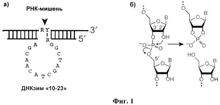 Ингибитор репродукции вируса гриппа а на основе комплекса наночастиц диоксида титана и олигонуклеотида